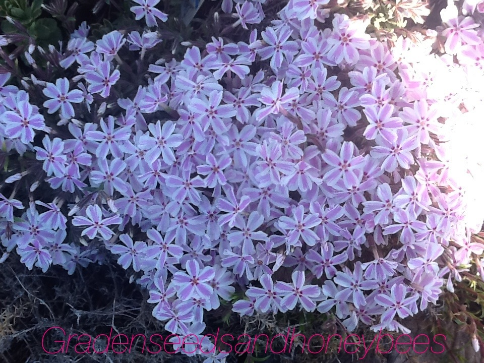 Perennial Shade Flowers That Bloom All Summer Next Image